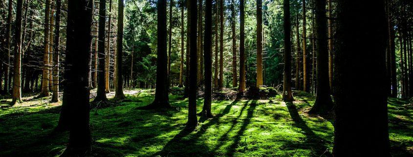 loi biodiversité